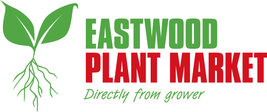 eastwood plant market